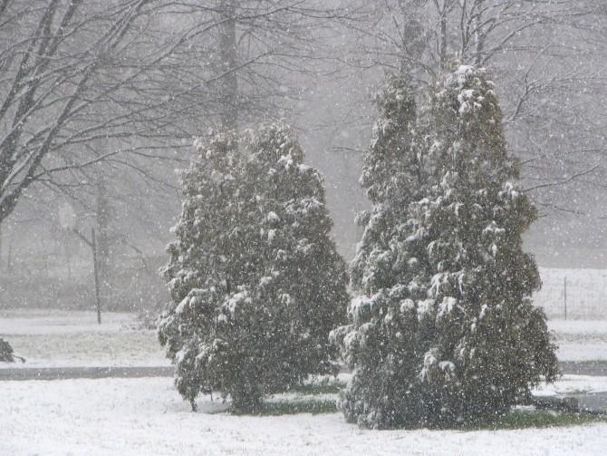 ninsoare, iarna