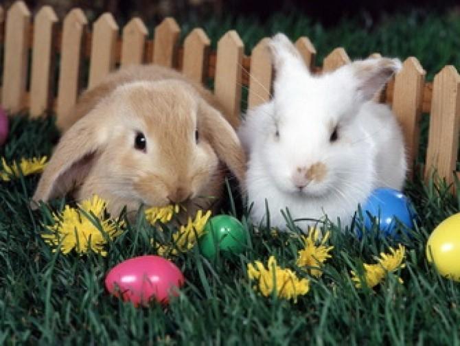 paste iepuri