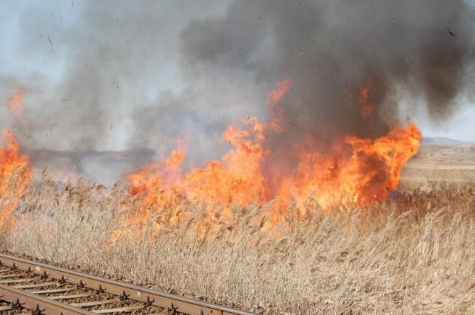 incendiu-vegetatie3