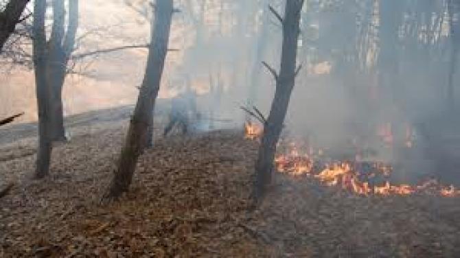 incendiu muntii rodnei