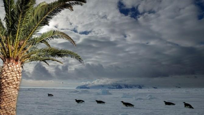 Istoria unei Antarctici pline de palmieri