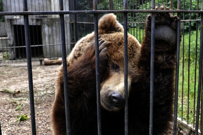 Poland Bears 2012