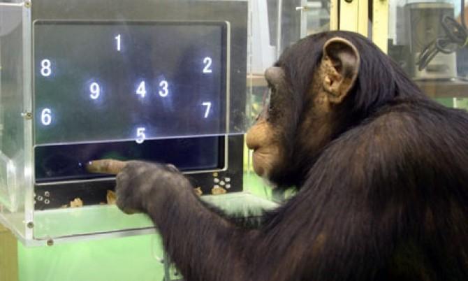 Super-Smart-Animals-007