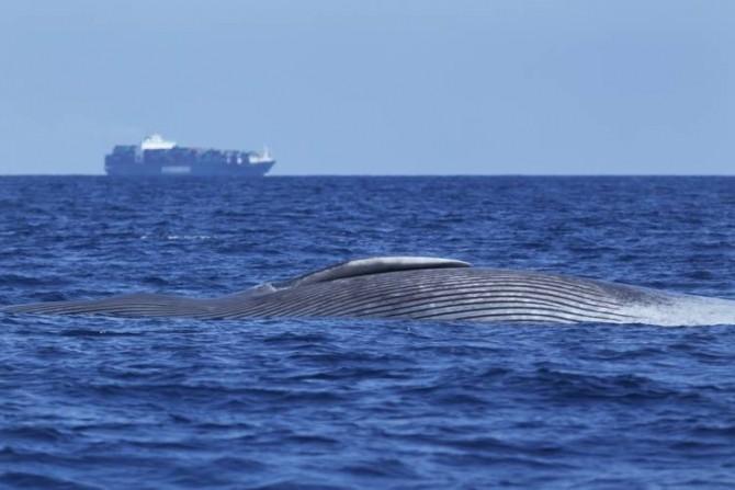01-balena-adormita-ucisa_11733488fe
