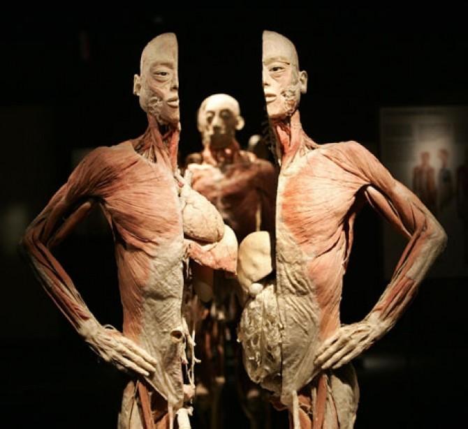 expozitie-cadavre-antipa