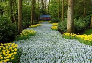 Grădină 2