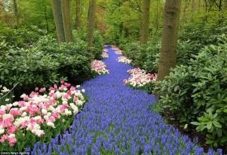 Grădină 3