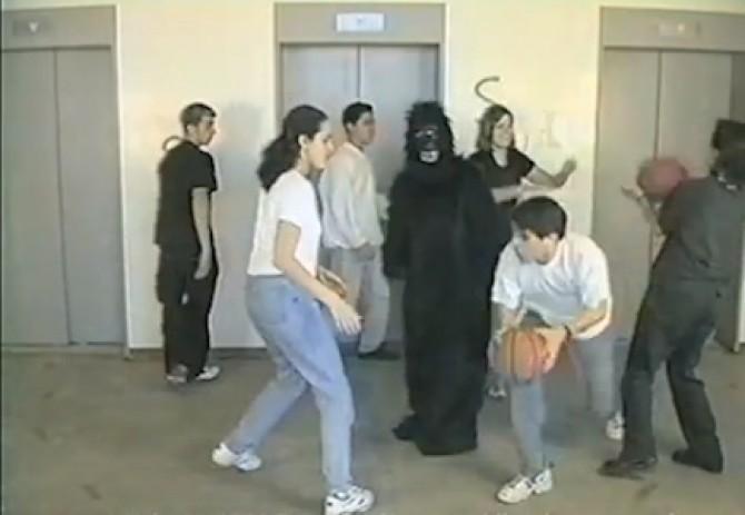 studiu_gorila