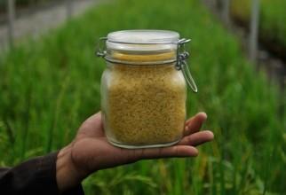 orez-auriu