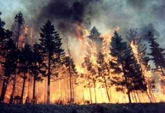 Incendiu pădure