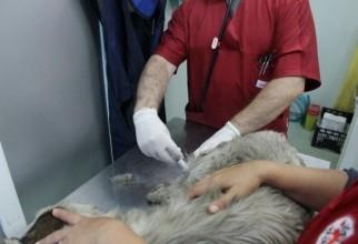 caine-mutilat-operatie (14)