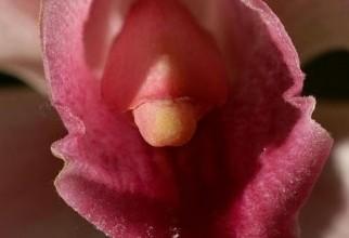 vagin (4)