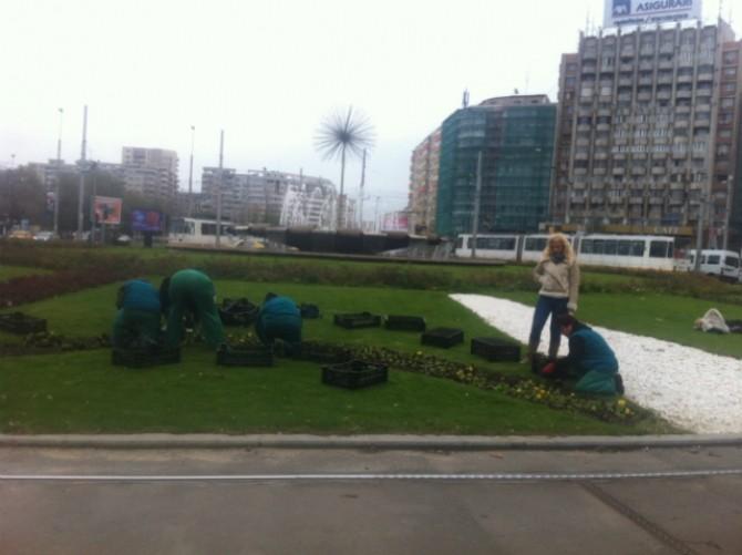 Plantare panseluțe.jpeg