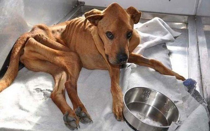 01-the_miracle_of_the_rescued_skinny_dog