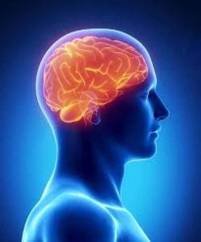Creier - imagine ilustrativă