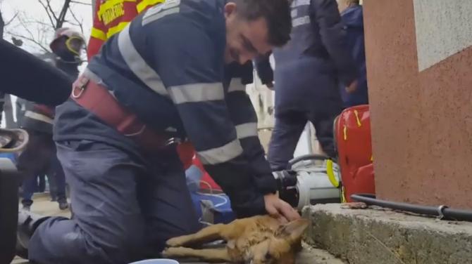 Mugurel Costache, pompier, câine resuscitat, incendiu