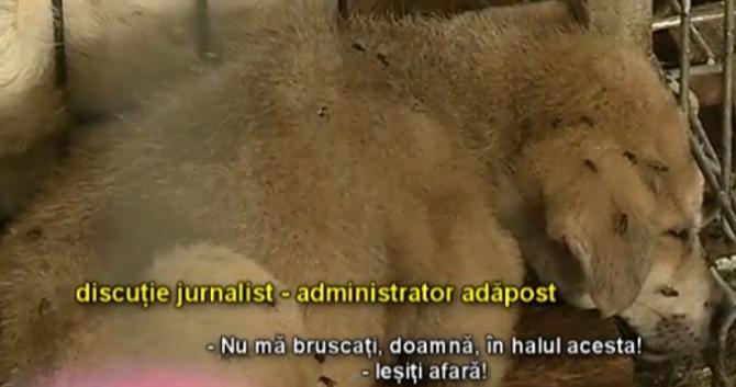 Foto: captură video reporterntv.ro