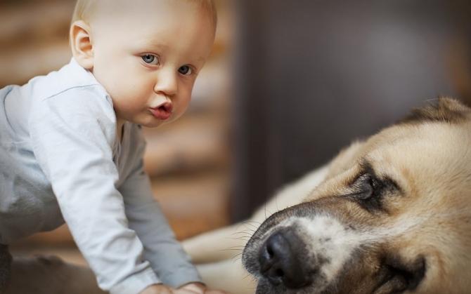 Câinii pot oferi protecție contra eczemelor și a astmului în cazul unora dintre copii