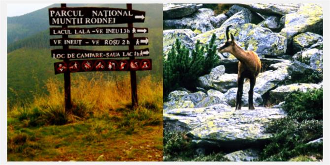 122 de exemplare de capră neagră trăiesc în Parcul Naţional Munţii Rodnei