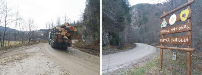 Camion cu Lemne, Piatra Craiului, rezervatie