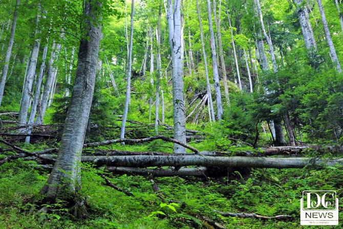 Pădure virgină, România, Piatra Craiului