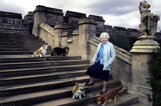 Regina Elisabeta a II-a alături de (de sus stânga) Willow (corgi), Vulcan (dorgi), Candy (dorgi) and Holly (corgi).