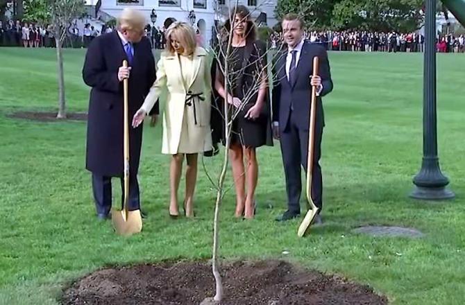 Stejar plantat la Casa Albă, Trump-Macron. foto: captura video youtube
