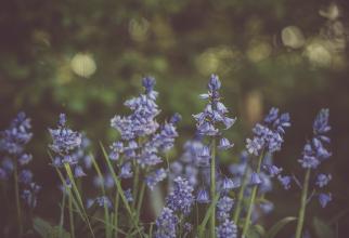 Plantele care țin țânțarii la distanță