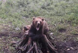 Zoo Brașov