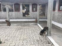 Câini ținuți în post la mănăstire. Situație incredibilă în România