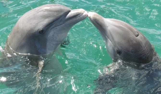 Delfinii formează ''prietenii de durată'', însă au anumite preferințe