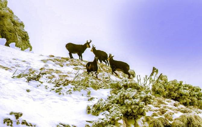 Angajări la Agenția Națională pentru Arii Naturale Protejate