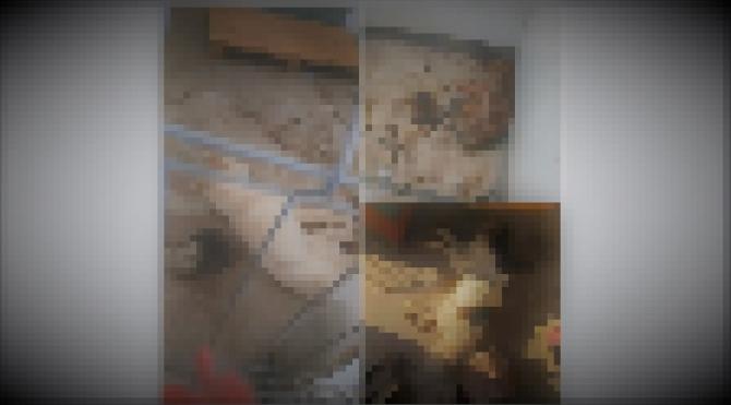 Căței morți - Prejmer