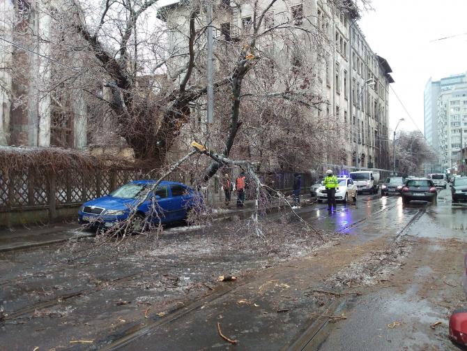 Copac rupt -  foto ilustrativ