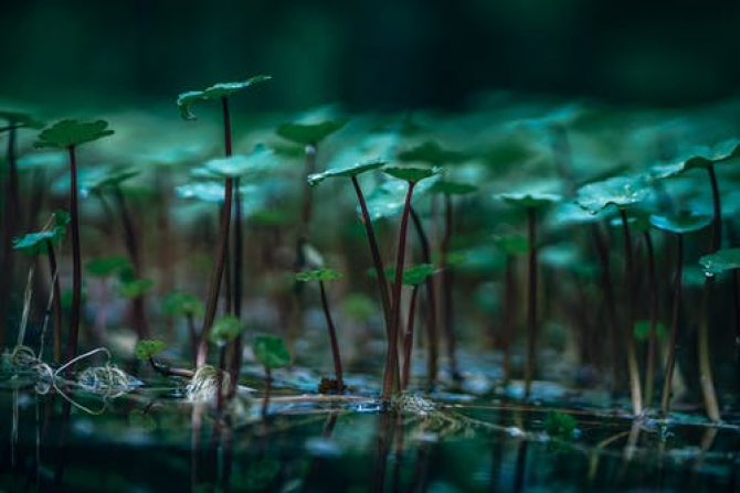 A fost descoperită gena care ajută plantele să reziste la lipsa de oxigen