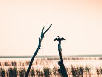 Daea, anunţ despre cormorani: Mulţi nu au cunoscut