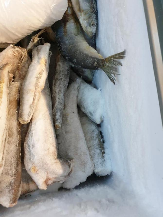 Pește congelat, expirat de câteva luni de zile. FOTO: Sorin Susanu / Facebook