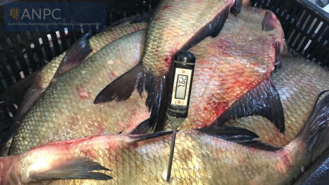 Pește confiscat. FOTO: ANPC