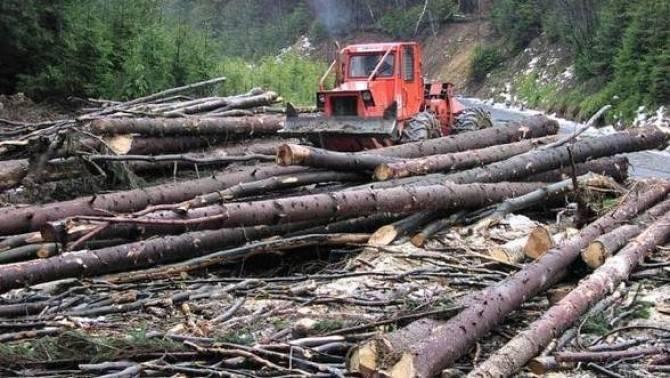 Consiliul Concurenței are în vizor 94 de companii care activează pi piața exploatărilor forestiere