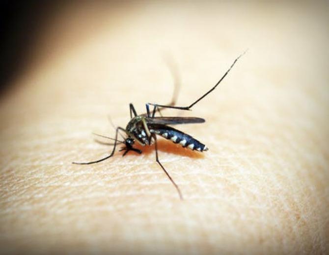 Virusul Zika se transmite și prin apa canalizărilor