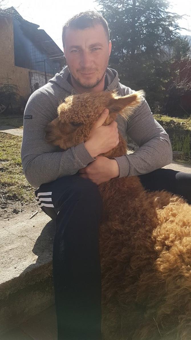Marian Godină cu alpaca