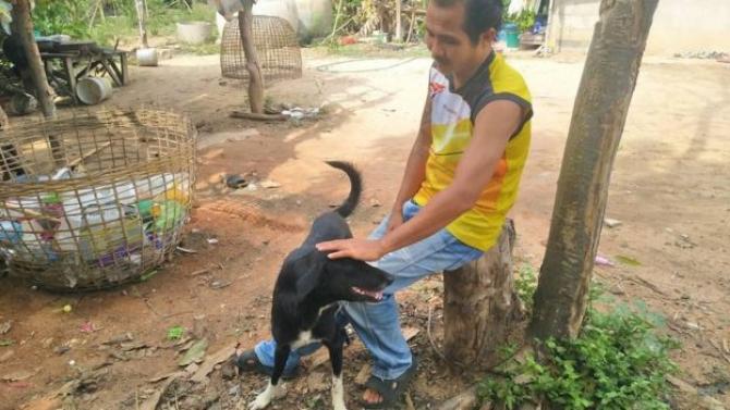 Ping-Pong-câine-salvator-bebeluș-Thailanda Sursa foto:KHAOSOD