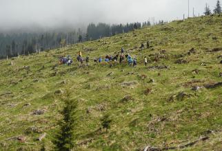 Reîmpădurire - imagine cu rol ilustrativ