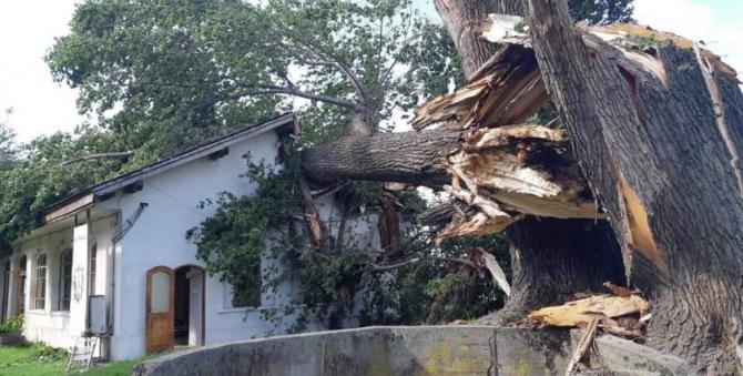 Cei doi plopi seculari au distrus clădirea Portului cultural de la Cetate. Foto: Facebook