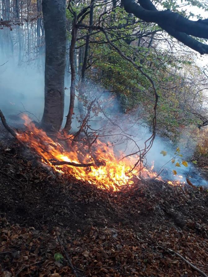 Incendiu de vegetație. FOTO: ISU Hunedoara