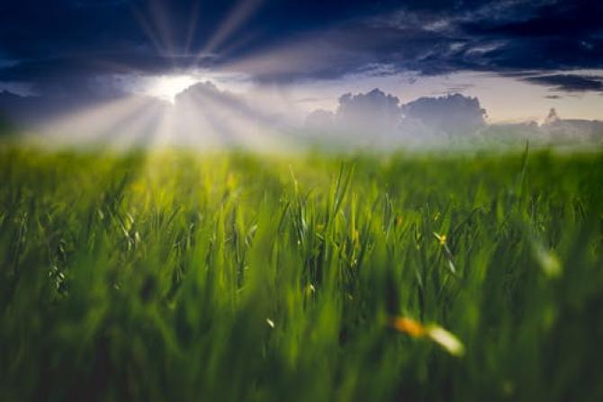 Irigațiile duc la sărăturarea solului. Soluția, obținută prin biotehnologie