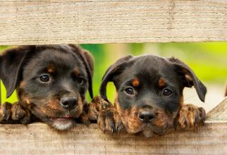 Impactul câinilor asupra sănătății mentale. Rezultatele surprinzătoare ale unui studiu