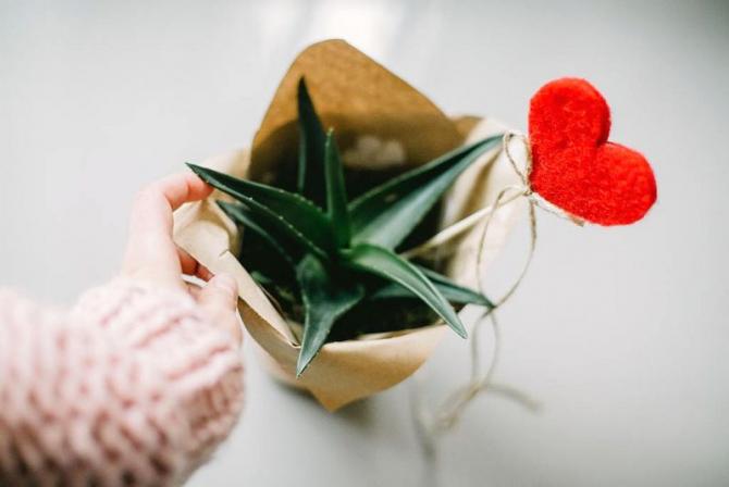 Aloe vera e benefică pentru sănătatea inimii