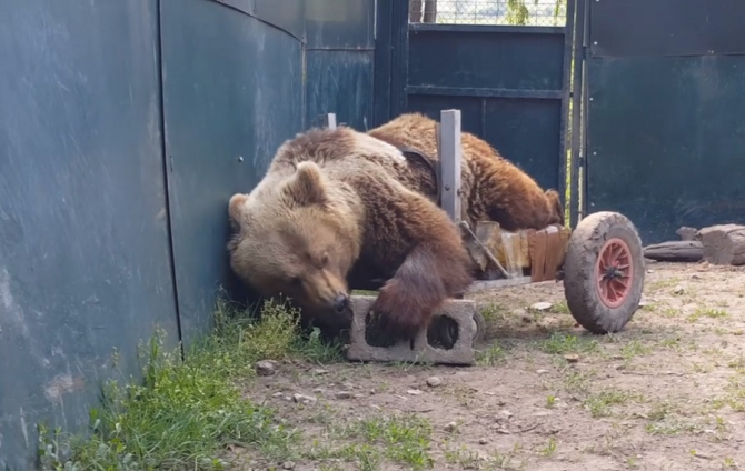 Ursulețul Usko