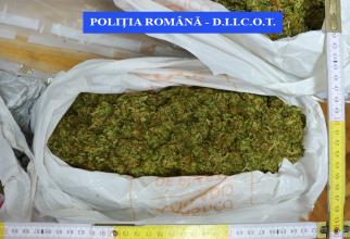 Droguri, cannabis. Foto arhivă: IPJ Brașov